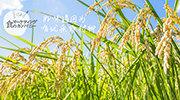 严选米种,精心栽培,美味健康好大米!