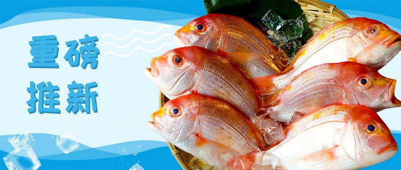 【重磅推新】新鲜的味道/长崎冰鲜日本黄鲷